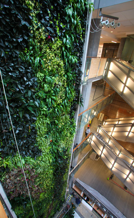 Living off the wall literally tabaret uottawa s online - Building a living wall ...